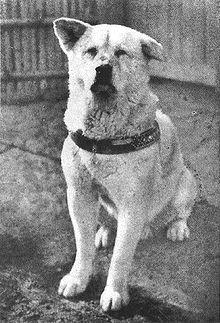"""220px Hachiko - Gerçek Hayattan Bir Köpeğin Hikayesi """"Hachiko"""""""