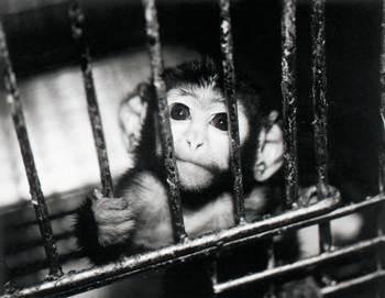 animal testing cage zps0eedb4af - Hayvanlar Üstünde Deney Yapan ve Yapmayan Firmalar