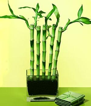 Çin Bambu Ağacının Yetişmesi, Olumlu Israr İçin Güzel Bir Örnektir.