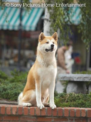 """et0410main - Gerçek Hayattan Bir Köpeğin Hikayesi """"Hachiko"""""""
