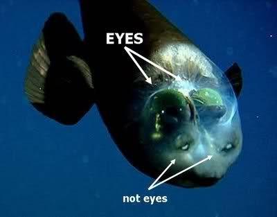 """Beyni Görünen Şeffaf Balık """"Macropinna Microstoma"""""""
