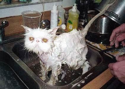 Kedi ve Banyo Aşkı (Islak Kediler) - karma