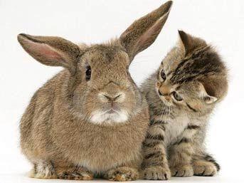 Gece İyi Gören Hayvanların Sırrı Çözüldü - egitim-ogretim