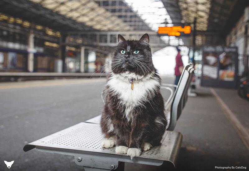 "kedi felix2 zpskvq4vfzp - İstasyon Kedisi (Sorumlusu) ""Felix"""