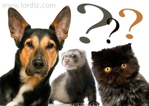Kedi, Köpek ve Gelincikler İçin Kimlik Çıkartma Zorunluluğu