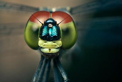 makro harikalar16 zps8aba5f20 - Harika Yakın Çekim Fotoğraf Çalışmaları