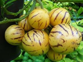 Pepino Meyvesi Nedir? Faydaları Nelerdir?