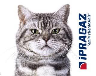 "Kedili İpragaz Reklamı ""Pissi"""