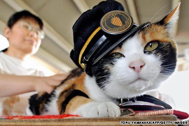 "Tren İstasyonu Şefi Calico Cinsi Kedi ""Tama Densha"""